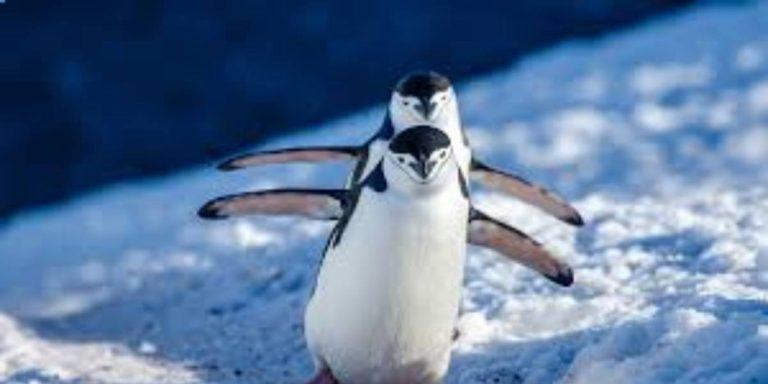 Animals Live in Antarctica