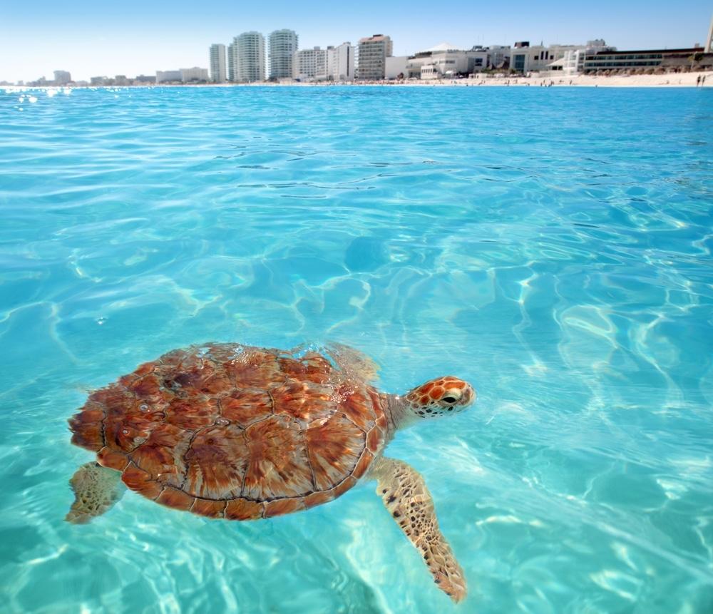 Cancun waters
