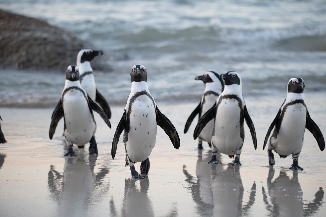 Hang out with Penguins