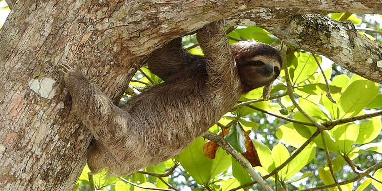 Why Are Sloths So Slow (And Other Facts)