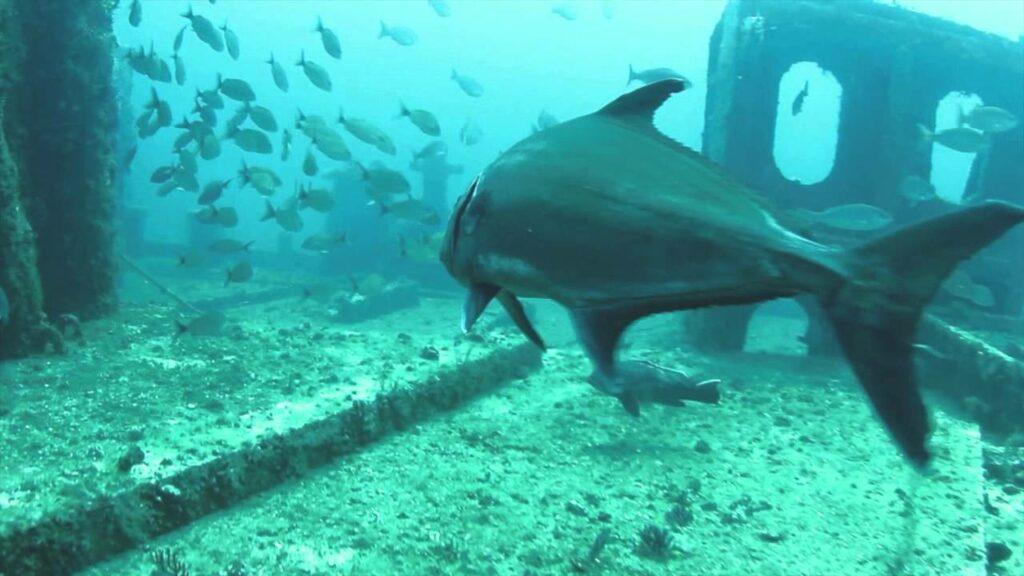 Myrtle Beach scuba diving - The Governor Shipwreck