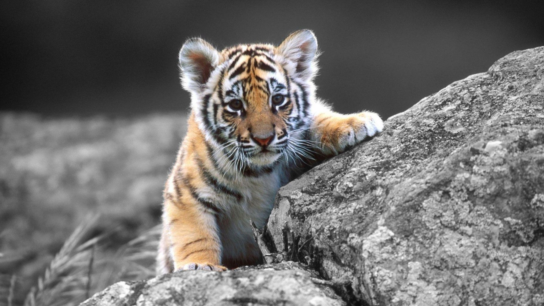 the cutest animals in the world