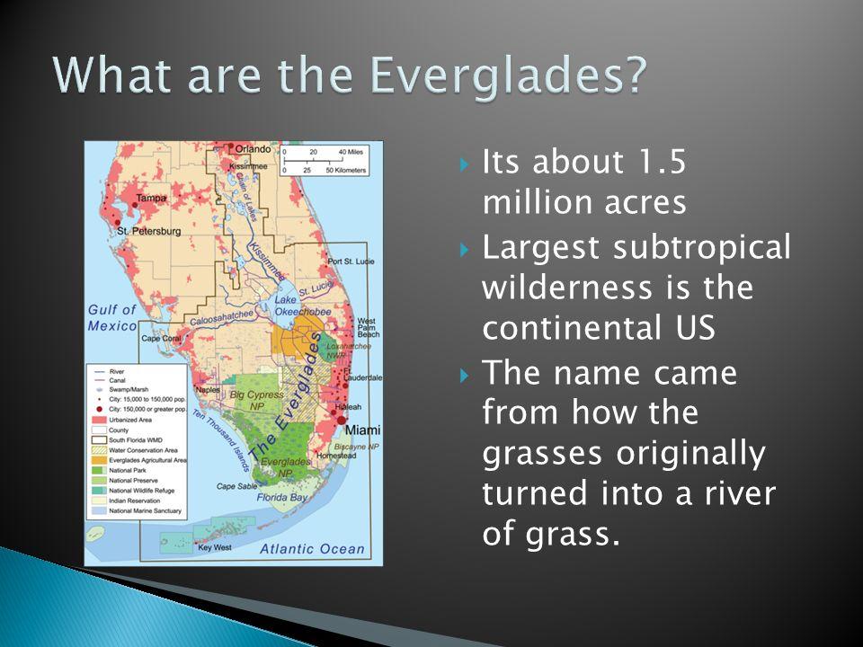 Everglades 1.5 million acres of land in Florida