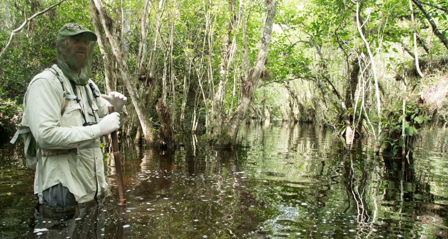 Largest Cypress Swamp in the World